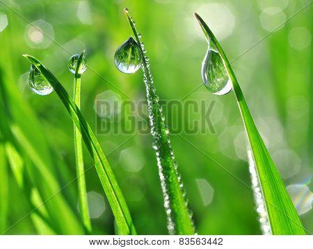 dew drop closeup