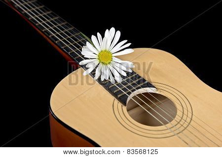 daisy on guitar