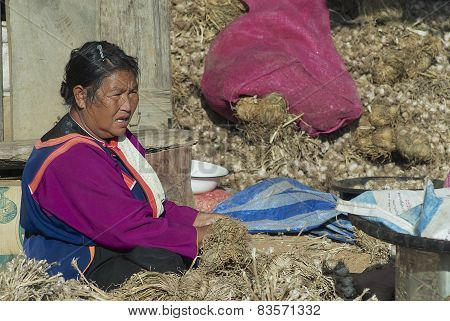 Senior woman of Lisu ethnic group sorts garlic in Chiang Mai, Thailand.