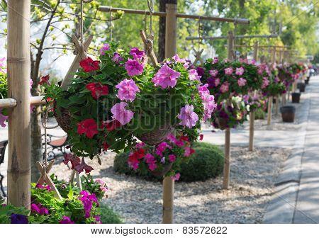 Flowers In Hanging Pots