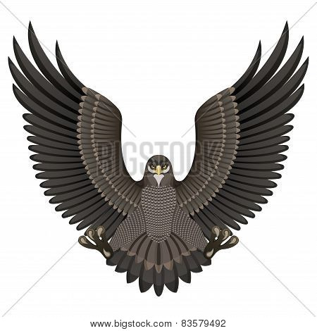 Eagle On A White Background
