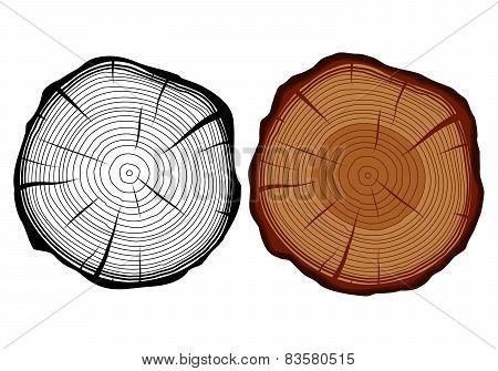 Tree Trunk In A Cut.