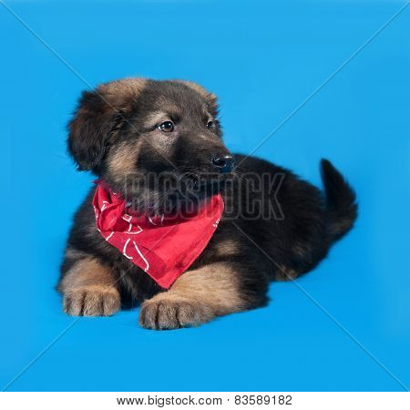 Black And Red Shaggy Puppy In Red Bandanna Lies On Blue