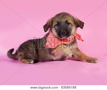 Brown Puppy In Orange Bandanna Lying On Pink