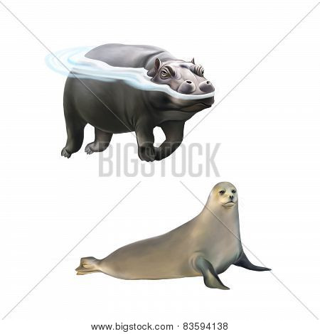 Hippopotamus swimming in the water, harp seal isolated on white background