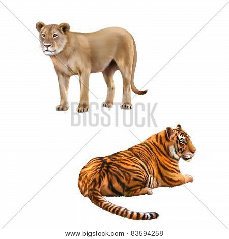 Lioness - Panthera leo, Portrait of Bengal Tiger, Panthera tigris tigris, laying in front of white b