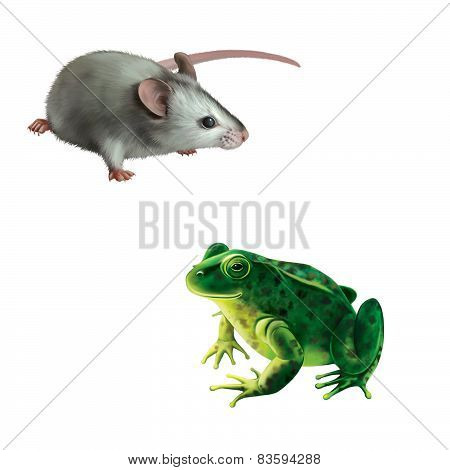 Cute gray mouse, Green frog with spots, spotted toad isolated on white background