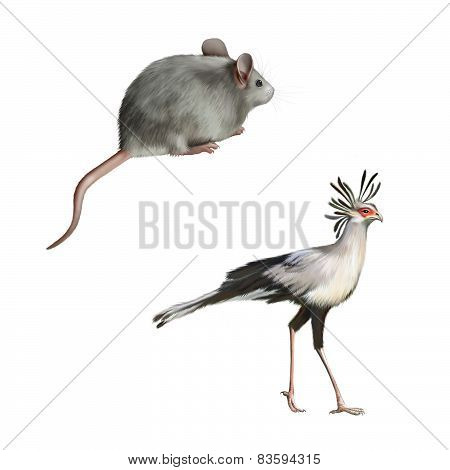 Secretarybird and Cute gray mouse isolated on white background