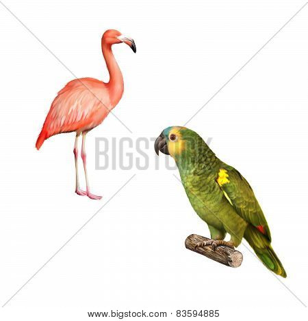 Yellow Naped Amazon Parrot, flamingo isolated on white background