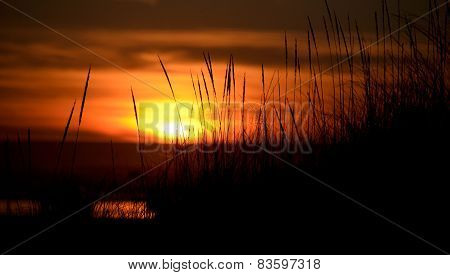 Tall Grass At Dunes Highlighted By Sunset