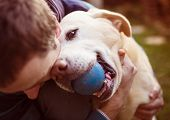 foto of cute dog  - Man having fun and playing with his dog - JPG