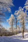pic of zurich  - Trees on the Uetliberg mountain in Zurich  - JPG