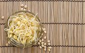pic of soybean sprouts  - Portion of preserved Soy Sprouts  - JPG