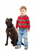 stock photo of staffordshire-terrier  - Cute little boy standing next to a dog breed Staffordshire Terrier - JPG