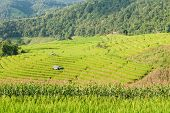 picture of shacks  - beautiful green rice field terrace with shack at Maejam Chiangmai Thailand - JPG