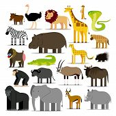 picture of african animals  - Vector Set Of Different African Animals Isolated - JPG