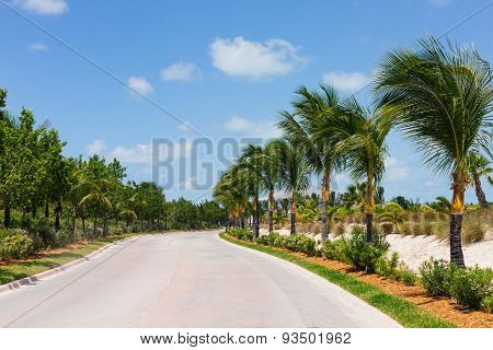 Palm Trees Along A Road
