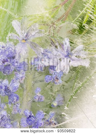 Vertical Abstraction Of Lavender Flowers