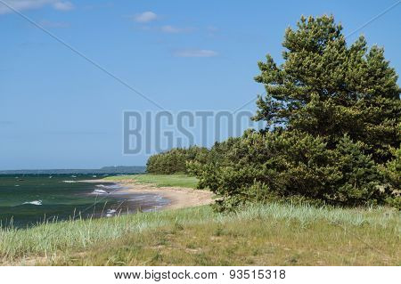 Baltic Sea Coast Scenic Landscape With Sandy Beach And Coniferous Forest