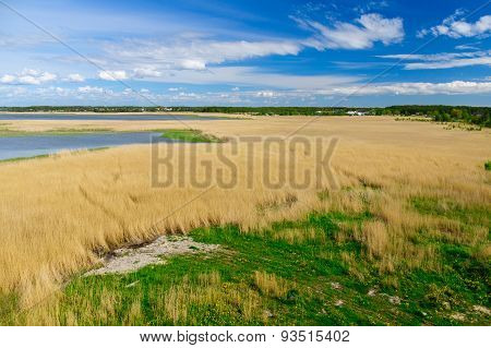 Reed Grass Backwater Area Under Blue Sky With Clouds Aerial View