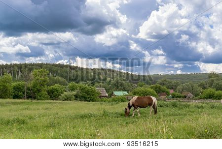 Single Horse Eating From Pasture With Clouds