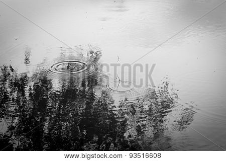 Rain Ripples On The Surface Of A Pond