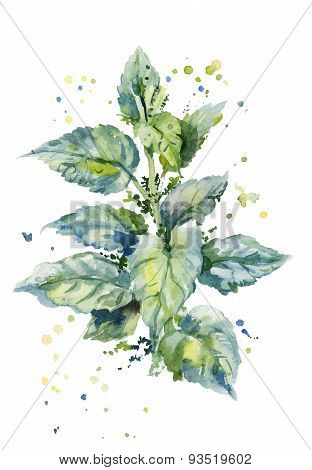 Watercolor Illustration Of A Bush Of Stinging Nettles