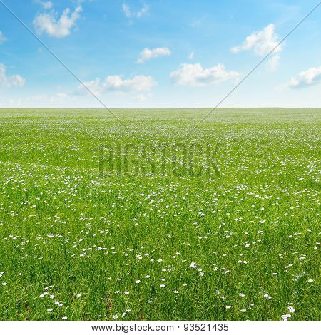 Field With Flowering Flax And Blue Sky