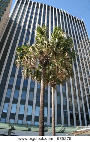 Palm Infront Of Building