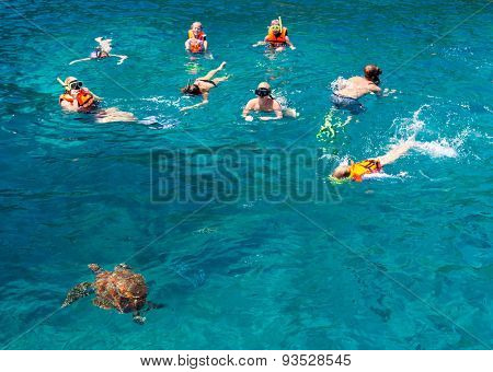 KOH SIMILAN, THAILAND - MARCH 7: Tourists snorkling at Similan Koh Similan No.8 Island in Similan national park with famous similan's turtles, Thailand, on March 7, 2014.
