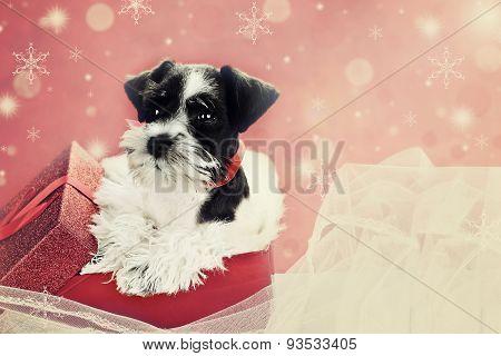 Retro Puppy In A Christmas Box