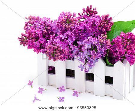 Lilac Flower Twig In Decoration Box
