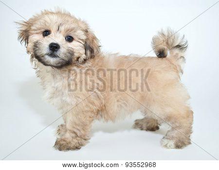 Pretty Puppy