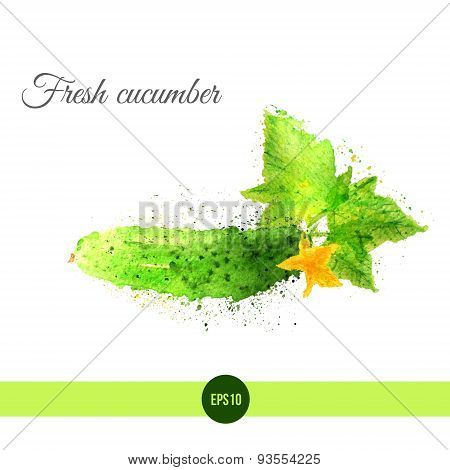 Vector watercolor fresh cucumber with leaves and flower. EPS10