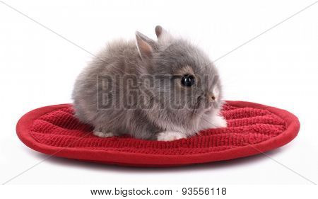 Cute little rabbit bunny on his red mat