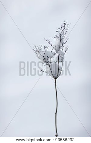 Branch Plants Without Leaves In Winter With Snow