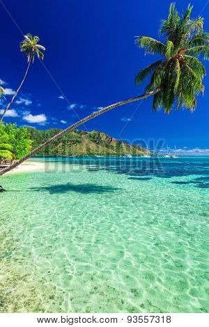 Public beach on the north side of tropical Moorea island, French Polynesia