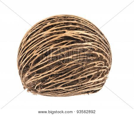 Cerbera Dry Fruit On White Background