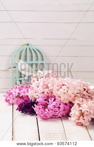 Background With Fresh Flowers Hyacinths