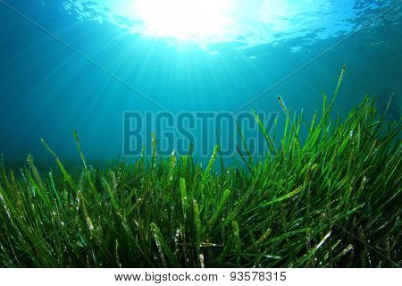 Underwater background green grass blue water