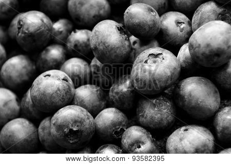 Black And White Of Lots Of Blueberries