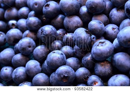 Blueberry Background Of Freshly Picked Fruit