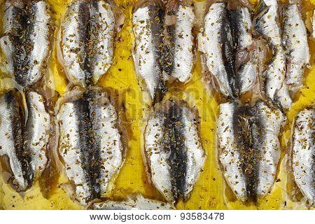 Sardines Fillet