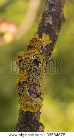 Moss grows on a tree branch