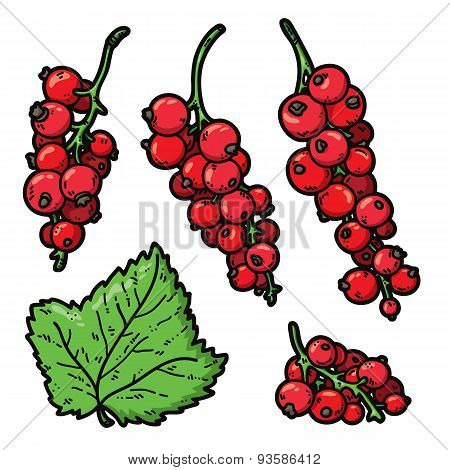 Red currant color