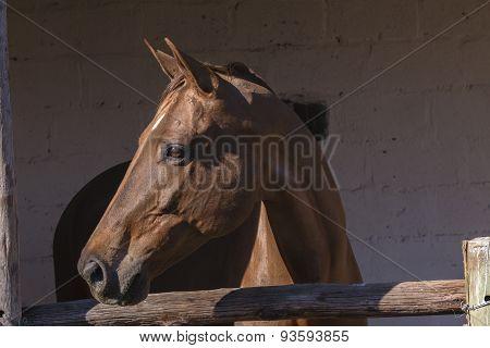 Horse Stable Portrait