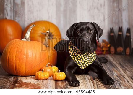 Fall Dog Portrait