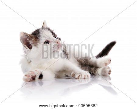 Spotty Curious Kitten.