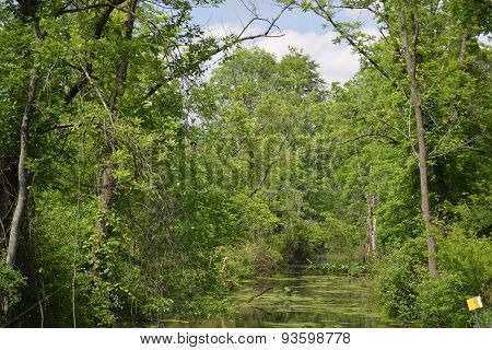 swamp with trees