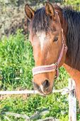 image of beautiful horses  - Horse portrait - JPG
